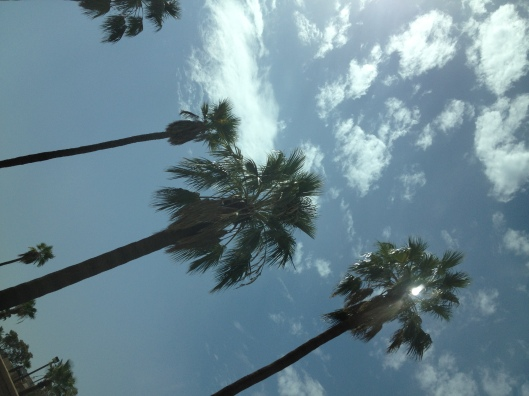 2021 KBB palms and sky-angle